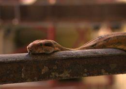 Snake on handrail_1_2015